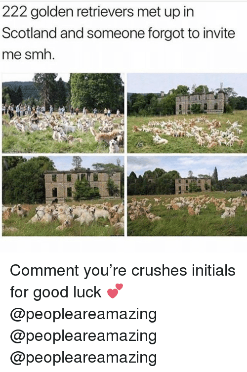 Memes, Smh, and Good: 222 golden retrievers met up in  Scotland and someone forgot to invite  me smh. Comment you're crushes initials for good luck 💕 @peopleareamazing @peopleareamazing @peopleareamazing