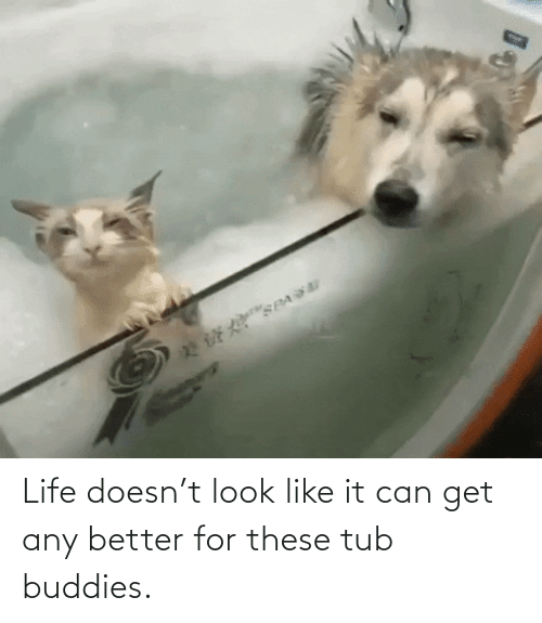 Can Get: 22E SPA Life doesn't look like it can get any better for these tub buddies.