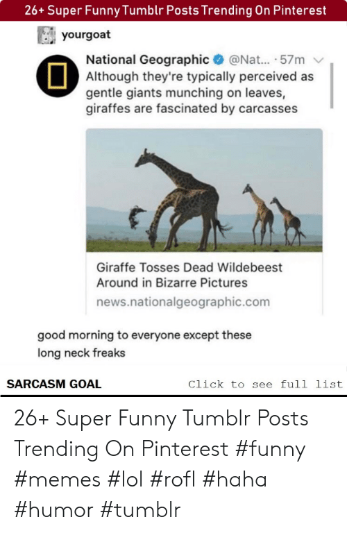 nat: 26+ Super Funny Tumblr Posts Trending On Pinterest  yourgoat  National Geographic@Nat... .57m  Although they're typically perceived as  gentle giants munching on leaves,  giraffes are fascinated by carcasses  Giraffe Tosses Dead Wildebeest  Around in Bizarre Pictures  news.nationalgeographic.com  good morning to everyone except these  long neck freaks  SARCASM GOAL  Click to see full list 26+ Super Funny Tumblr Posts Trending On Pinterest #funny #memes #lol #rofl #haha #humor #tumblr