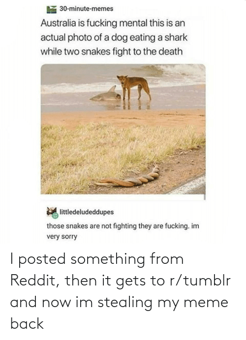 stealing: 30-minute-memes  Australia is fucking mental this is an  actual photo of a dog eating a shark  while two snakes fight to the death  littledeludeddupes  those snakes are not fighting they are fucking. im  very sorry I posted something from Reddit, then it gets to r/tumblr and now im stealing my meme back
