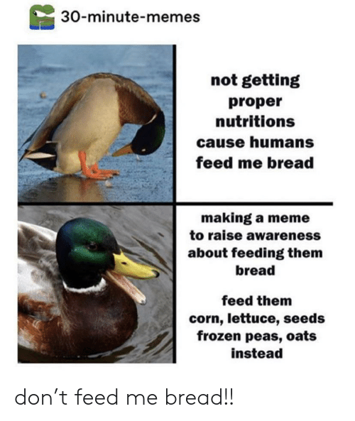 corn: 30-minute-memes  not getting  proper  nutritions  cause humans  feed me bread  making a meme  to raise awareness  about feeding them  bread  feed them  corn, lettuce, seeds  frozen peas, oats  instead don't feed me bread!!