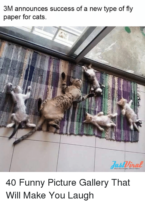 Cats, Funny, and Videos: 3M announces success of a new type of fly  paper for cats  Most vihaf im  Gifs & Videos 40 Funny Picture Gallery That Will Make You Laugh