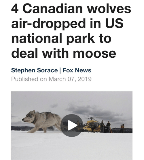 News, Stephen, and Fox News: 4 Canadian wolves  air-dropped in US  national park to  deal with moose  Stephen Sorace | Fox News  Published on March 07, 2019