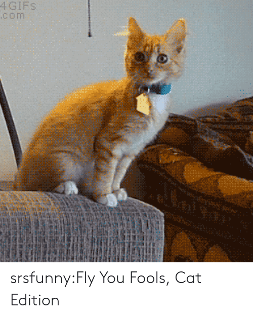 Tumblr, Blog, and Gifs: 4 GIFS  com srsfunny:Fly You Fools, Cat Edition