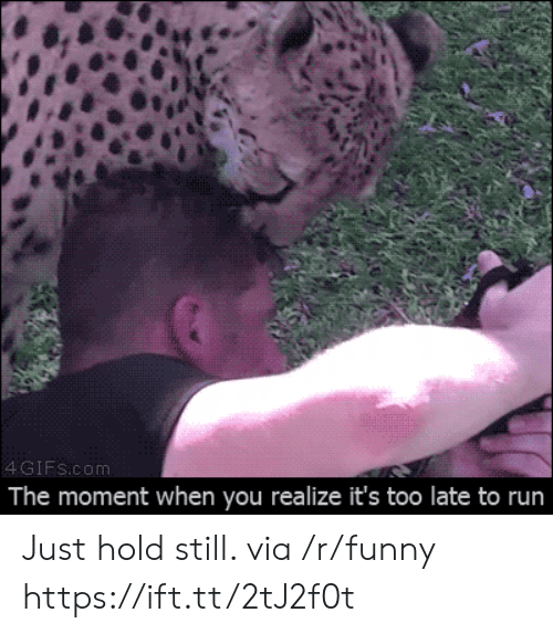 Funny, Run, and Gifs: 4 GIFs.com  The moment when you realize it's too late to run Just hold still. via /r/funny https://ift.tt/2tJ2f0t