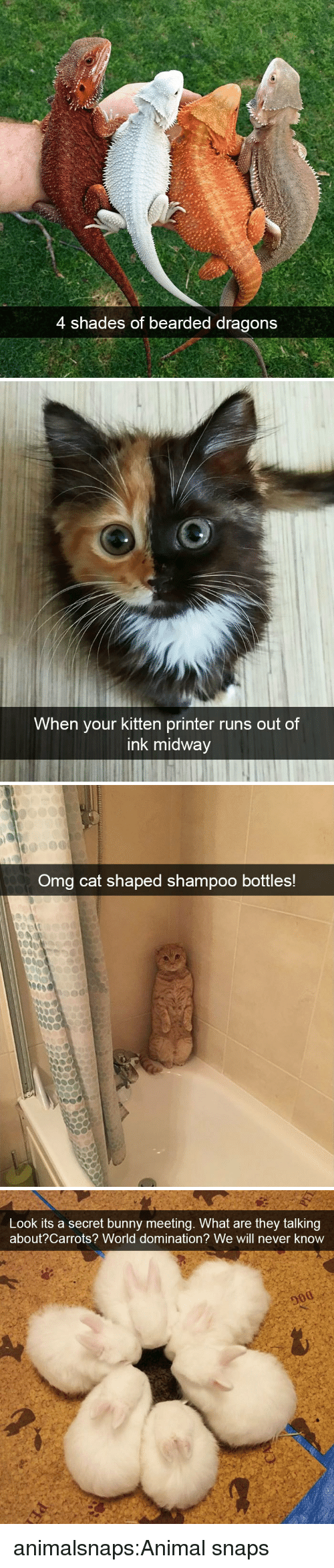 carrots: 4 shades of bearded dragons   When your kitten printer runs out of  ink midway   Omg cat shaped shampoo bottles!   Look its a secret bunny meeting. What are they talking  about?Carrots? World domination? We will never know animalsnaps:Animal snaps