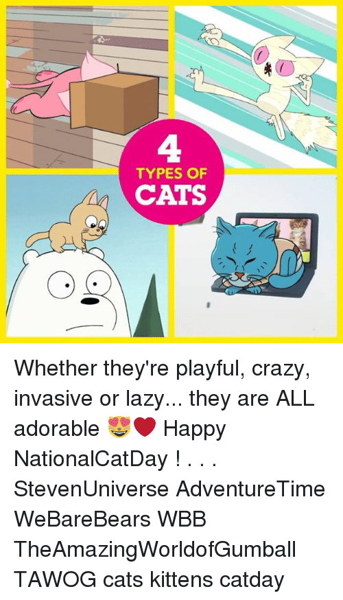 Cats, Crazy, and Lazy: 4  TYPES OF  CATS Whether they're playful, crazy, invasive or lazy... they are ALL adorable 😻❤️ Happy NationalCatDay ! . . . StevenUniverse AdventureTime WeBareBears WBB TheAmazingWorldofGumball TAWOG cats kittens catday