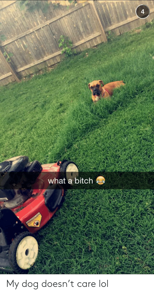 Doesn: 4  what a bitch  DANGERPEIGAO My dog doesn't care lol