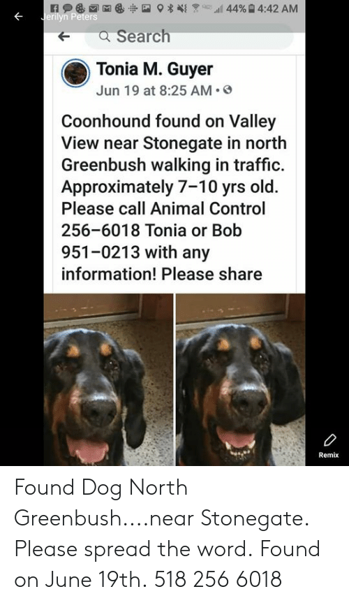 Memes, Traffic, and Control: 44% 4:42 AM  Jerilyn Peters  a Search  Tonia M. Guyer  Jun 19 at 8:25 AM  Coonhound found on Valley  View near Stonegate in north  Greenbush walking in traffic.  Approximately 7-10 yrs old.  Please call Animal Control  256-6018 Tonia or Bob  951-0213 with any  information! Please share  Remix Found Dog North Greenbush....near Stonegate.  Please spread the word. Found on June 19th.  518 256 6018