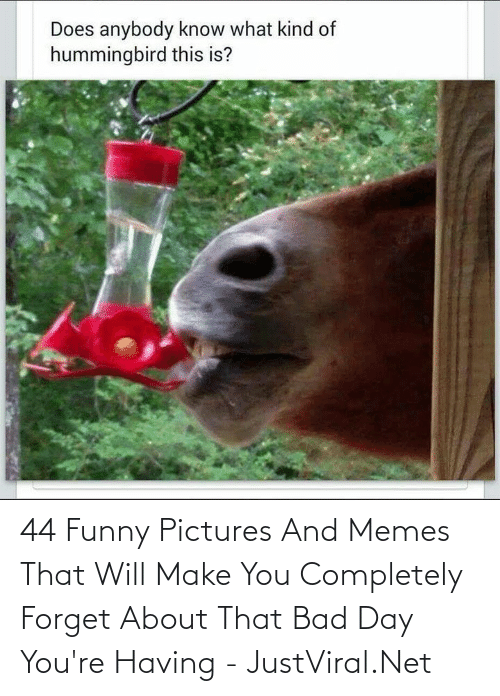 Having: 44 Funny Pictures And Memes That Will Make You Completely Forget About That Bad Day You're Having - JustViral.Net