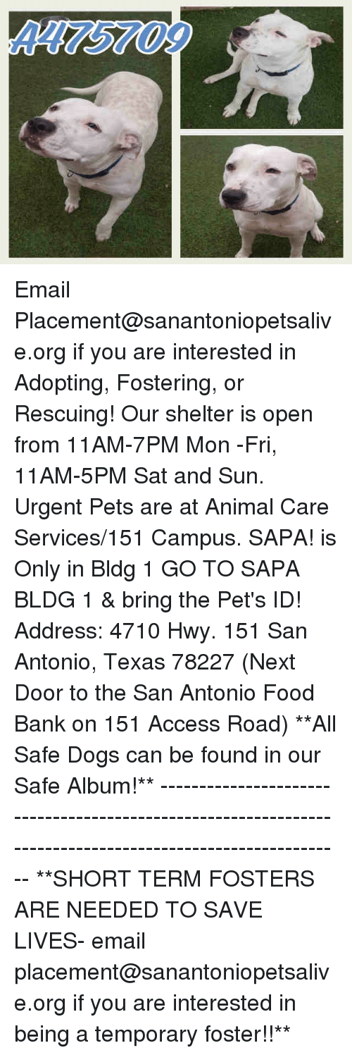 Dogs, Food, and Memes: 4475709 Email Placement@sanantoniopetsalive.org if you are interested in Adopting, Fostering, or Rescuing!  Our shelter is open from 11AM-7PM Mon -Fri, 11AM-5PM Sat and Sun.  Urgent Pets are at Animal Care Services/151 Campus. SAPA! is Only in Bldg 1 GO TO SAPA BLDG 1 & bring the Pet's ID! Address: 4710 Hwy. 151 San Antonio, Texas 78227 (Next Door to the San Antonio Food Bank on 151 Access Road)  **All Safe Dogs can be found in our Safe Album!** ---------------------------------------------------------------------------------------------------------- **SHORT TERM FOSTERS ARE NEEDED TO SAVE LIVES- email placement@sanantoniopetsalive.org if you are interested in being a temporary foster!!**