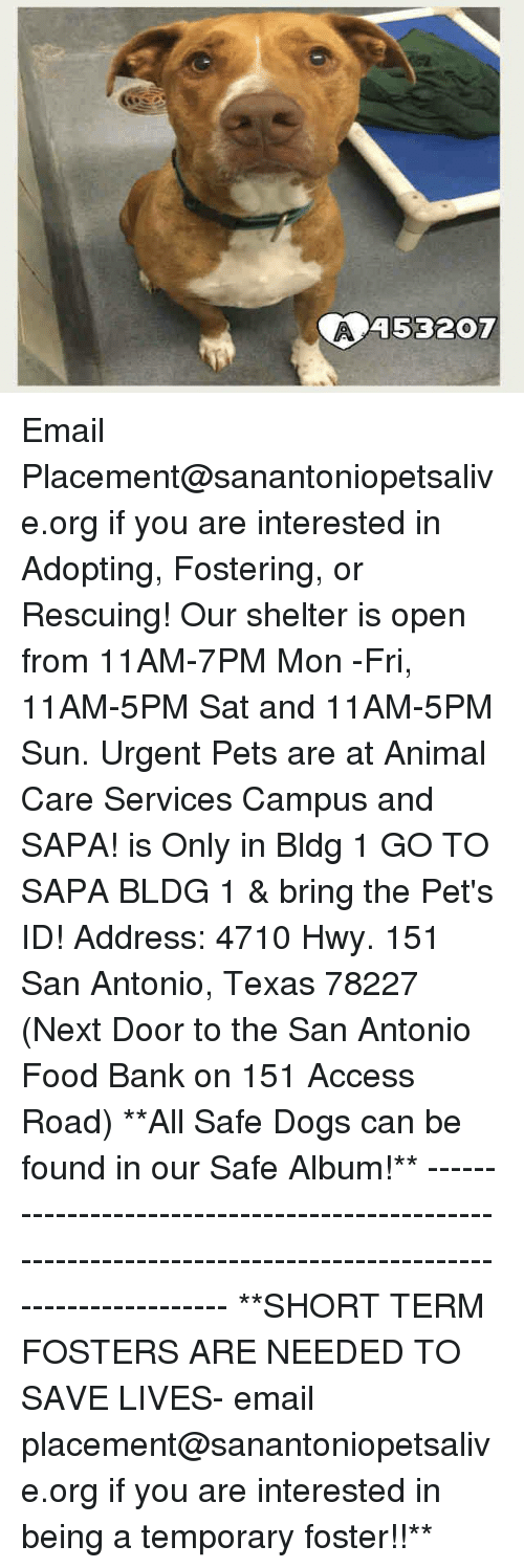 Dogs, Food, and Memes: 45320T Email Placement@sanantoniopetsalive.org if you are interested in Adopting, Fostering, or Rescuing!  Our shelter is open from 11AM-7PM Mon -Fri, 11AM-5PM Sat and 11AM-5PM Sun.  Urgent Pets are at Animal Care Services Campus and SAPA! is Only in Bldg 1 GO TO SAPA BLDG 1 & bring the Pet's ID! Address: 4710 Hwy. 151 San Antonio, Texas 78227 (Next Door to the San Antonio Food Bank on 151 Access Road)  **All Safe Dogs can be found in our Safe Album!** ---------------------------------------------------------------------------------------------------------- **SHORT TERM FOSTERS ARE NEEDED TO SAVE LIVES- email placement@sanantoniopetsalive.org if you are interested in being a temporary foster!!**