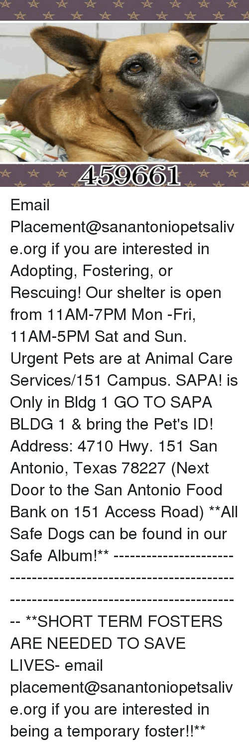 Dogs, Food, and Memes: 459661 Email Placement@sanantoniopetsalive.org if you are interested in Adopting, Fostering, or Rescuing!  Our shelter is open from 11AM-7PM Mon -Fri, 11AM-5PM Sat and Sun.  Urgent Pets are at Animal Care Services/151 Campus. SAPA! is Only in Bldg 1 GO TO SAPA BLDG 1 & bring the Pet's ID! Address: 4710 Hwy. 151 San Antonio, Texas 78227 (Next Door to the San Antonio Food Bank on 151 Access Road)  **All Safe Dogs can be found in our Safe Album!** ---------------------------------------------------------------------------------------------------------- **SHORT TERM FOSTERS ARE NEEDED TO SAVE LIVES- email placement@sanantoniopetsalive.org if you are interested in being a temporary foster!!**