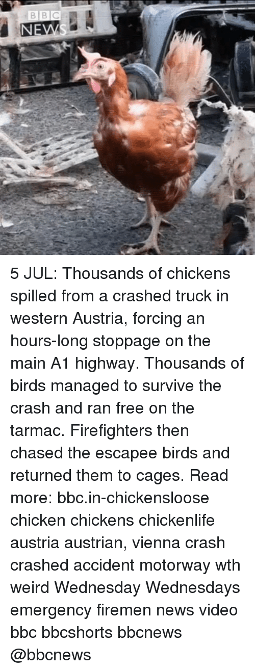 Memes, News, and Weird: 5 JUL: Thousands of chickens spilled from a crashed truck in western Austria, forcing an hours-long stoppage on the main A1 highway. Thousands of birds managed to survive the crash and ran free on the tarmac. Firefighters then chased the escapee birds and returned them to cages. Read more: bbc.in-chickensloose chicken chickens chickenlife austria austrian, vienna crash crashed accident motorway wth weird Wednesday Wednesdays emergency firemen news video bbc bbcshorts bbcnews @bbcnews