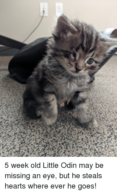 Hearts, Old, and Odin: 5 week old Little Odin may be missing an eye, but he steals hearts where ever he goes!