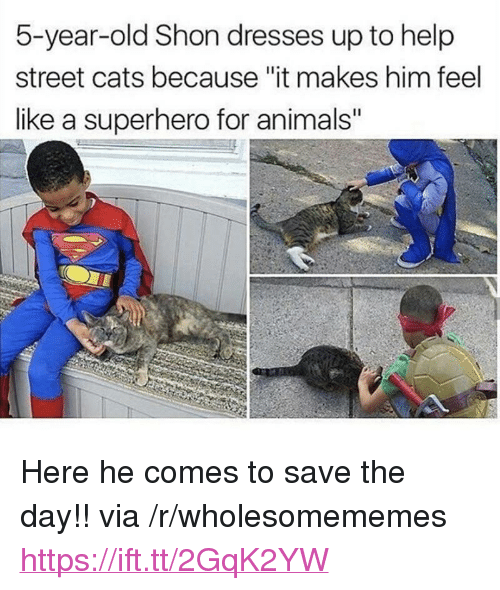 """Animals, Cats, and Superhero: 5-year-old Shon dresses up to help  street cats because """"it makes him feel  like a superhero for animals"""" <p>Here he comes to save the day!! via /r/wholesomememes <a href=""""https://ift.tt/2GqK2YW"""">https://ift.tt/2GqK2YW</a></p>"""