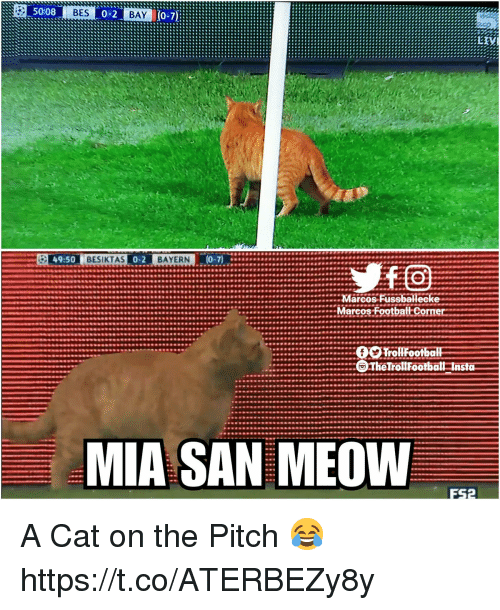 Memes, Bayern, and 🤖: 50:08  BES  BAY  49:50  BESIKTAS  BAYERN  Marcos Fussballec  Marcos  FootbattCorner  0  frollFootbo  ll  ...TheTrollFootball Insta  MIA SAN MEOW A Cat on the Pitch 😂 https://t.co/ATERBEZy8y