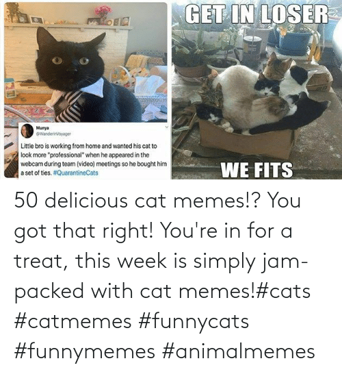 Simply: 50 delicious cat memes!? You got that right! You're in for a treat, this week is simply jam-packed with cat memes!#cats #catmemes #funnycats #funnymemes #animalmemes