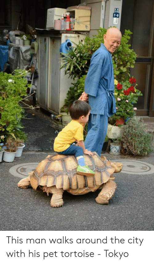 Tokyo, Pet, and Tortoise: 7-9 This man walks around the city with his pet tortoise - Tokyo