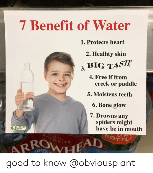 Memes, Free, and Good: 7 Benefit of Water  Protects heart  2. Healhty skin  3, BIG TASTE  4. Free if from  creek or puddle  5. Moistens teetlh  6. Bone glow  7. Drowns any  spiders might  have be in mouth  obvious  plant  RITE  109 good to know @obviousplant
