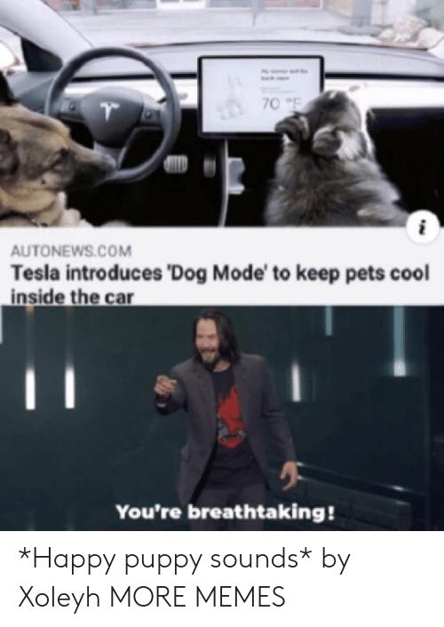 Dank, Memes, and Target: 70 F  AUTONEWS.COM  Tesla introduces 'Dog Mode' to keep pets cool  inside the car  You're breathtaking! *Happy puppy sounds* by Xoleyh MORE MEMES