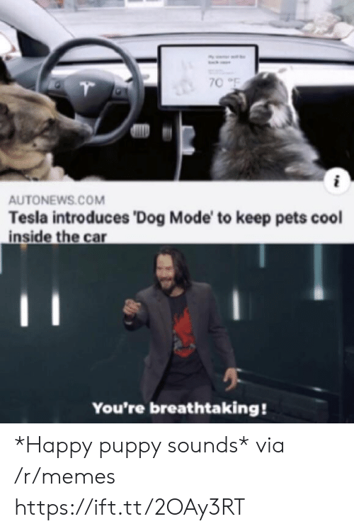 Memes, Pets, and Cool: 70 F  AUTONEWS.COM  Tesla introduces 'Dog Mode' to keep pets cool  inside the car  You're breathtaking! *Happy puppy sounds* via /r/memes https://ift.tt/2OAy3RT