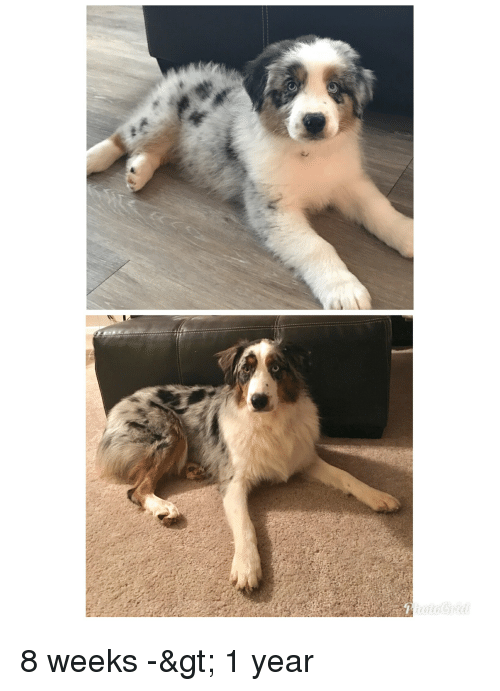 Year and Weeks: 8 weeks -> 1 year