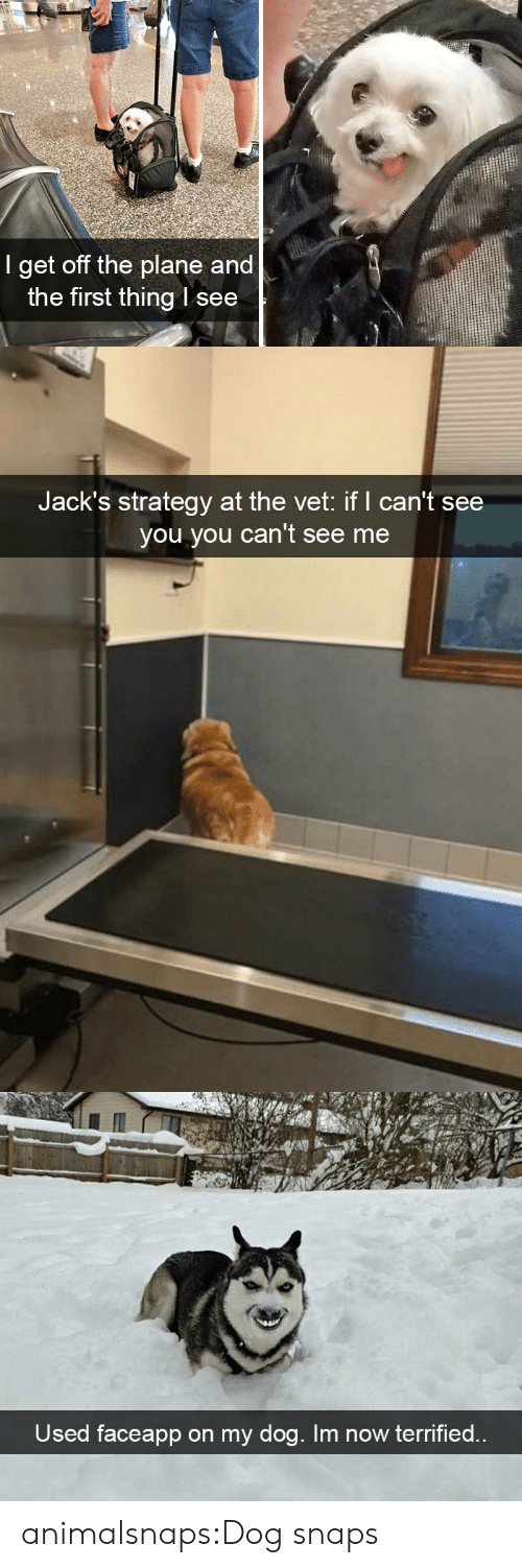 vet: 84  I get off the plane and  the first thing l see   Jack's strategy at the vet: if I can't see  you you can't see me   Used faceapp on my dog. Im now terrified.. animalsnaps:Dog snaps