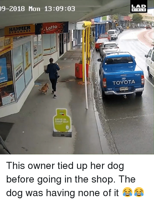 Dank, Toyota, and Drive: 9-2018 Mon 13:09:03  LAD  BIBL E  HAMMER  Lotto.  BARDWARE  TOYOTA  GWR958  DRIVE IN  SWAP OUT This owner tied up her dog before going in the shop. The dog was having none of it 😂😂