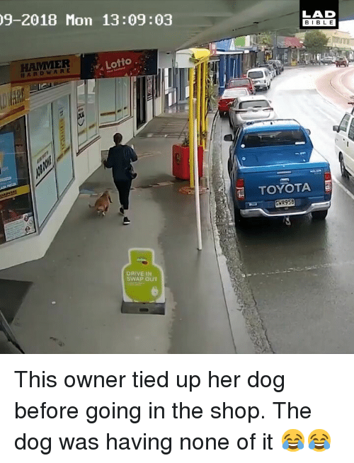 Memes, Drive, and Lotto: 9-2018 Mon 13:09:03  LAD  BIBL E  HAMMER  Lotto.  HTOYOTA  GWR958  DRIVE IN  SWAP OUT  0) This owner tied up her dog before going in the shop. The dog was having none of it 😂😂