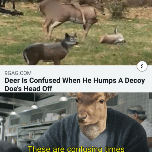 Deer: 9GAG.COM  Deer Is Confused When He Humps A Decoy  Doe's Head Off  These are confusing times