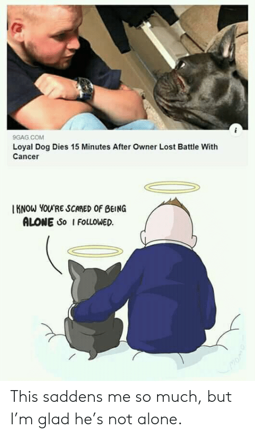 Know Youre: 9GAG COM  Loyal Dog Dies 15 Minutes After Owner Lost Battle With  Cancer  KNOW YOU'RE SCARED OF BEING  ALONE So I FOLLOWED This saddens me so much, but I'm glad he's not alone.