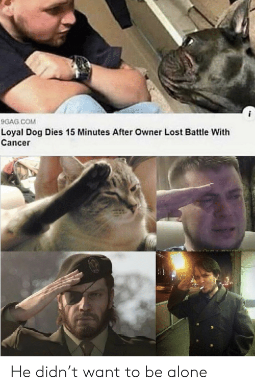 15 minutes: 9GAG COM  Loyal Dog Dies 15 Minutes After Owner Lost Battle With  Cancer He didn't want to be alone