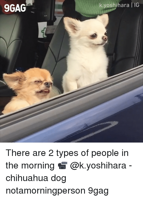 9gag, Chihuahua, and Memes: 9GAG  yoshihara IG There are 2 types of people in the morning 📹 @k.yoshihara - chihuahua dog notamorningperson 9gag