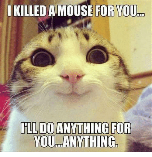 Grumpy Cat, Mouse, and Anth: I KILLED A MOUSE FOR YOU  ILL DO ANTHING FOR  YOU ANYTHING.