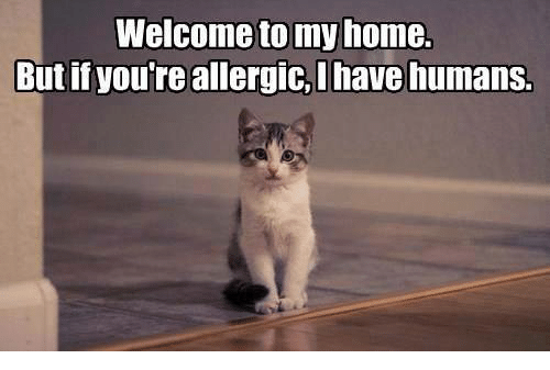Welcome To My Home But If Youre Allergic Ihave Humans Grumpy Cat