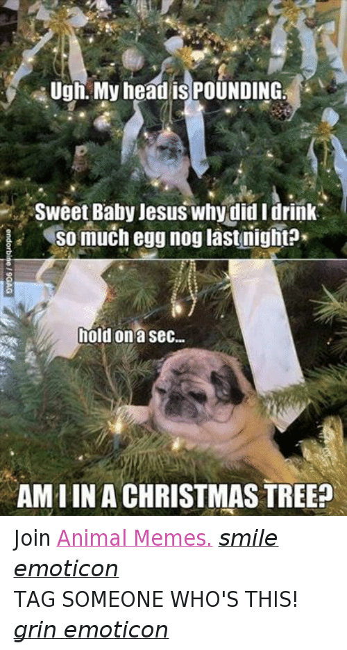 Animals, Anime, and Baby, It's Cold Outside: Ugh, My head is POUNDING  Sweet Baby Jesus why did I drink  So much egg nog last nightP  hold on a sec...  AMIIN A CHRISTMAS TREE? Join Animal Memes. smile emoticon TAG SOMEONE WHO'S THIS! grin emoticon