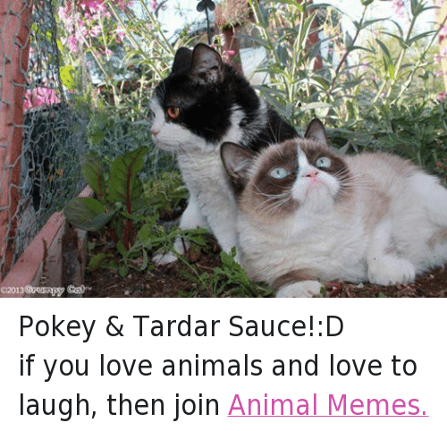 Animals, Anime, and Cats: 02013 Grumpy Cat Pokey & Tardar Sauce!:D if you love animals and love to laugh, then join Animal Memes.