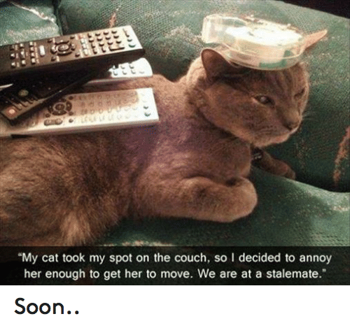 """stalemate: """"My cat took my spot on the couch, so l decided to annoy  her enough to get her to move. We are at a stalemate."""" Soon.."""