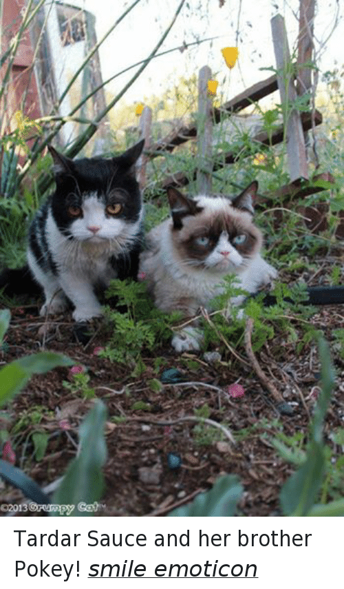 Grumpy Cat, Smile, and Smiles: 02013  Orurmpy Tardar Sauce and her brother Pokey! smile emoticon
