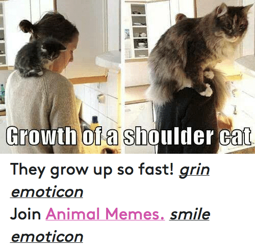 Animals, Anime, and Cats: Growth of a Shoulder Cat They grow up so fast! grin emoticon  Join Animal Memes. smile emoticon