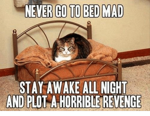 Revenge, Grumpy Cat, and Mad: NEVER GO TO BED MAD  STAY AWAKE ALL NIGHT  AND PLO  A HORRIBLE REVENGE