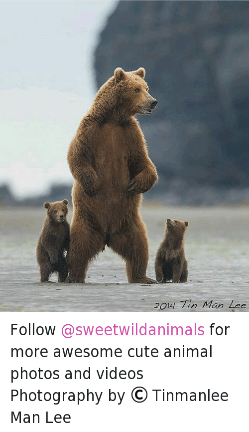 Animals, Anime, and Cute: 2O4-77, Mരn Zഭ് Follow @sweetwildanimals for more awesome cute animal photos and videos -Photography by © Tinmanlee Man Lee