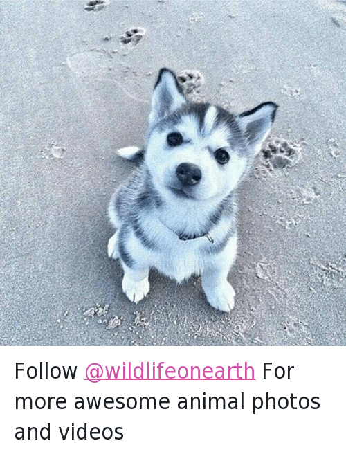 Animals, Anime, and Cute Animals: @cutewildanimals Follow @wildlifeonearth For more awesome animal photos and videos