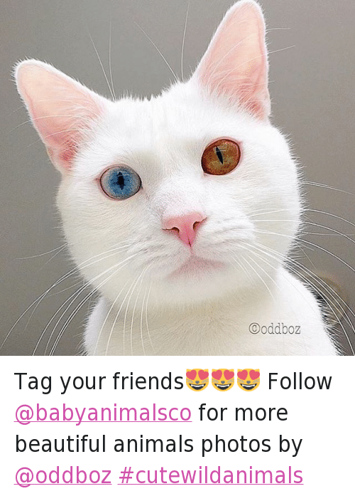 Animals, Anime, and Beautiful: Tag your friends😻😻😻-Follow @babyanimalsco for more beautiful animals-photos by @oddboz cutewildanimals