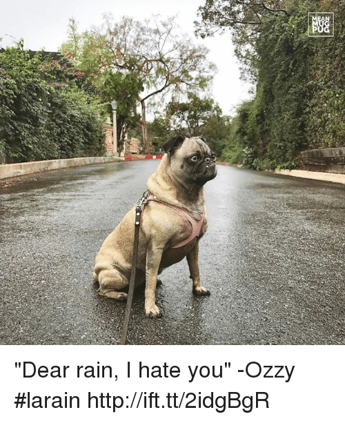 "Memes, 🤖, and Ozzy: a  錖 ""Dear rain, I hate you"" -Ozzy #larain http://ift.tt/2idgBgR"
