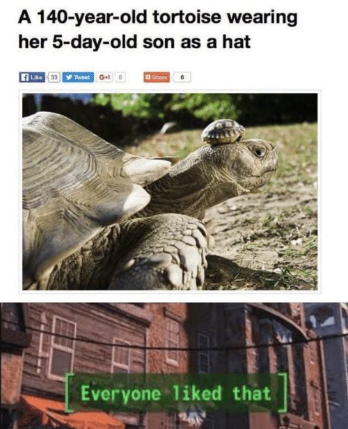 tortoise: A 140-year-old tortoise wearing  her 5-day-old son as a hat  Like 33 Tweet G+10  Share 6  Everyone liked that