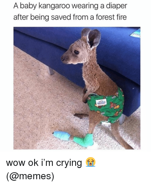 Crying, Fire, and Memes: A baby kangaroo wearing a diaper  after being saved from a forest fire wow ok i'm crying 😭 (@memes)