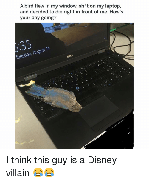 Disney, Memes, and Laptop: A bird flew in my window, sh*t on my laptop,  and decided to die right in front of me. How's  your day going?  Tuesday, August 14 I think this guy is a Disney villain 😂😂