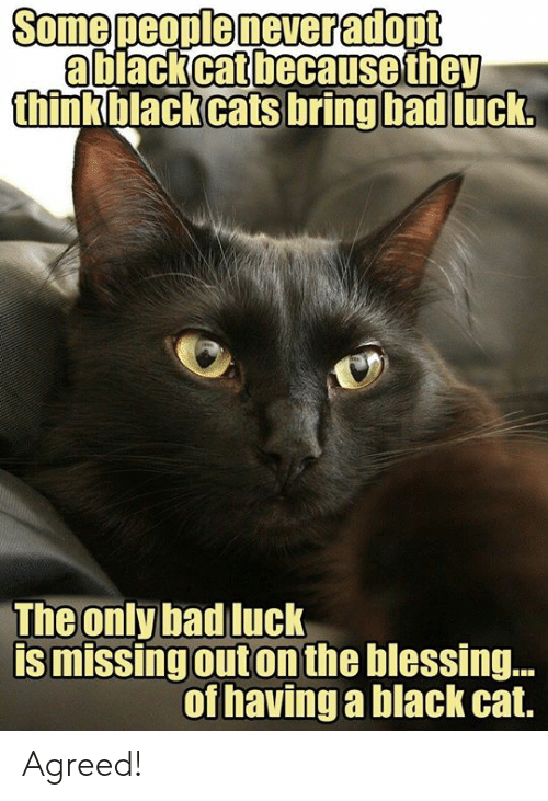 Bad Luck: a black cat because they  thinkblackcats bring bad  luck  The only bad luck  is missingouton the blessing..  of havinga black cat. Agreed!